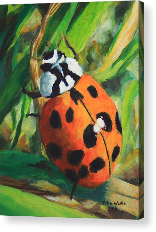 Ladybug Acrylic Print featuring the painting Ladybug by John Wallie