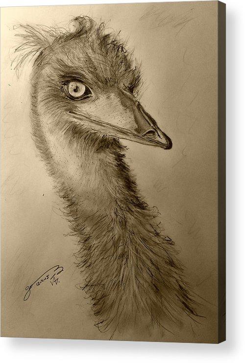 My Acrylic Print featuring the drawing My Friend Emu by Jose A Gonzalez Jr
