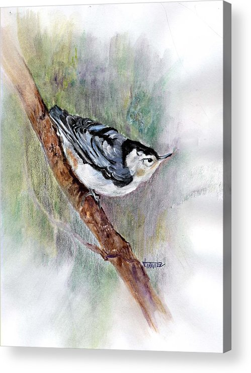 Animal Acrylic Print featuring the painting Nutthatch by Jimmie Trotter