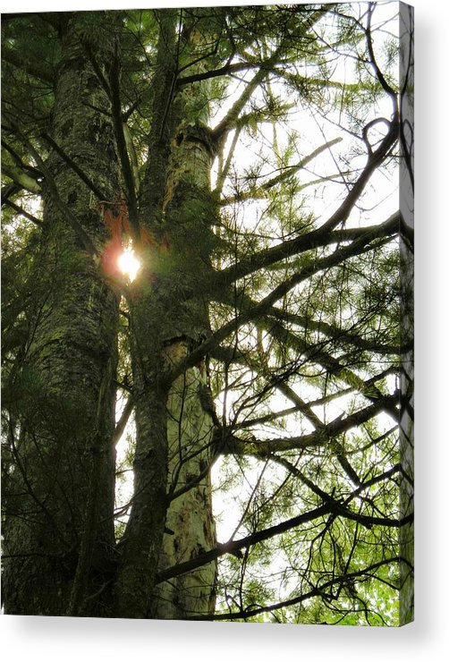 Trees Acrylic Print featuring the photograph Peek A Boo by Peter Mowry
