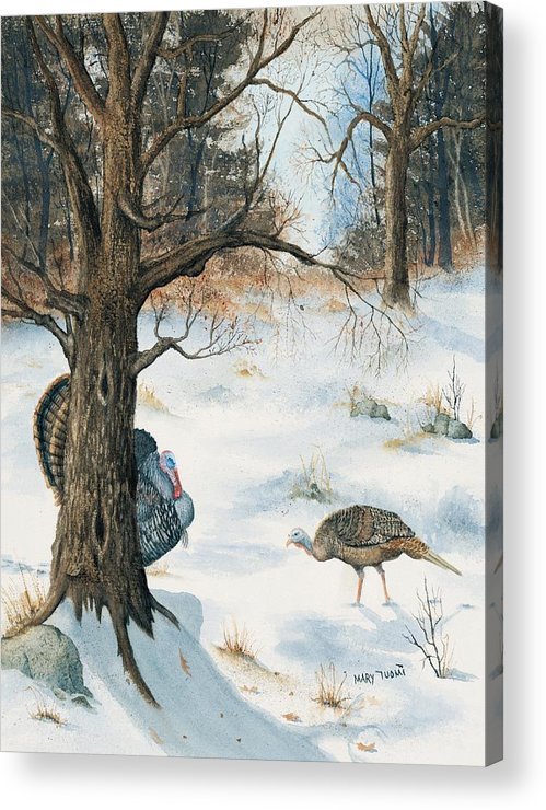 Turkey Acrylic Print featuring the painting Peeping Tom by Mary Tuomi