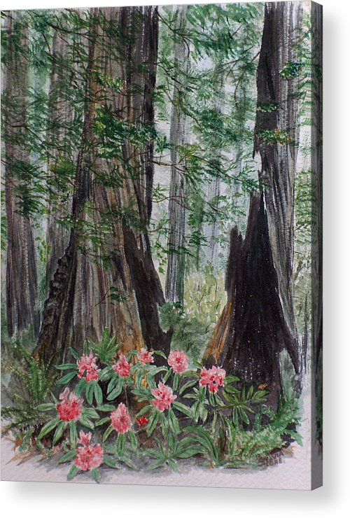 Redwood Acrylic Print featuring the painting Redwoods by Sylvia Stone