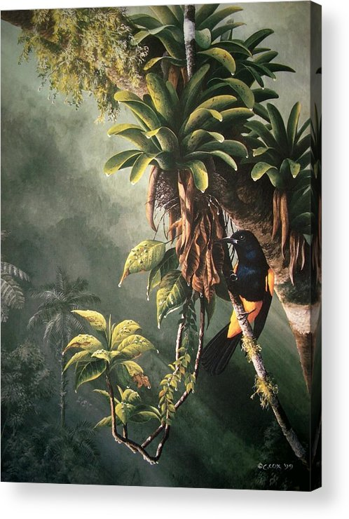 Chris Cox Acrylic Print featuring the painting St. Lucia Oriole In Bromeliads by Christopher Cox