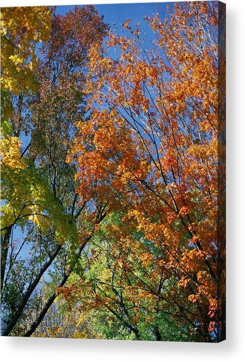 Trees Acrylic Print featuring the photograph Study For Autumn 2 by Steve Parrott