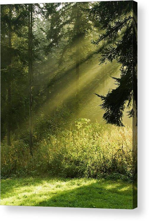 Nature Acrylic Print featuring the photograph Sunlight by Daniel Csoka