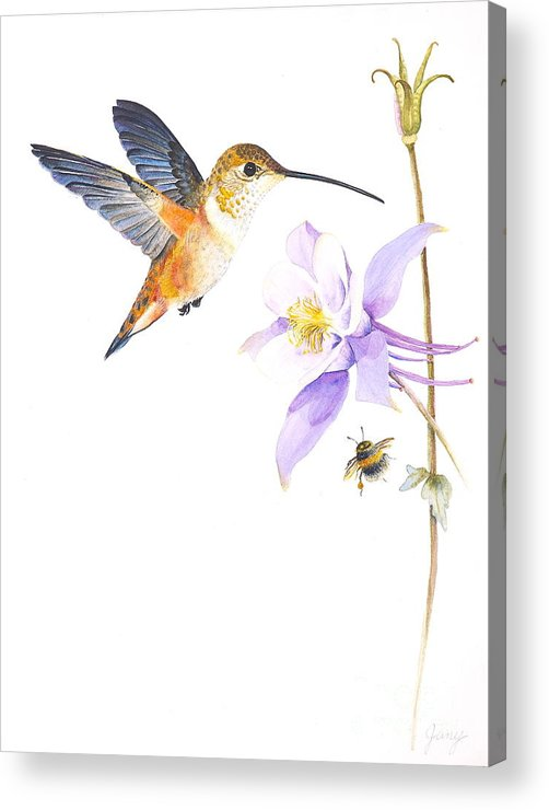 Hummingbird Acrylic Print featuring the painting The Nectar Hunt by Jany Schindler