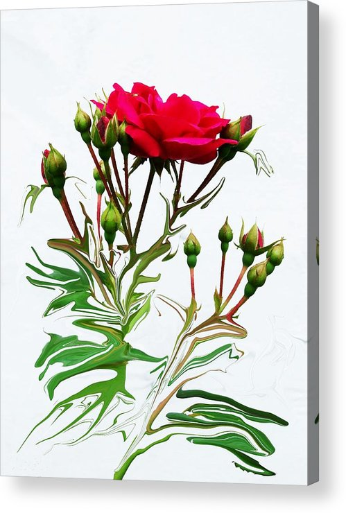 Rose Acrylic Print featuring the photograph The Rose by Jim Darnall