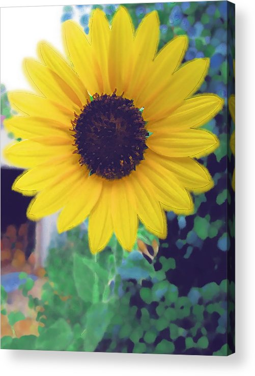 Sun Flower Acrylic Print featuring the photograph The Sunflower by Chuck Shafer
