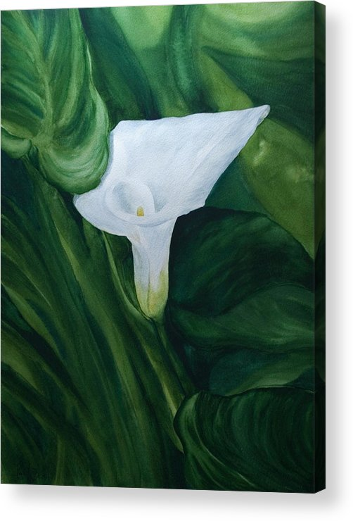 Floral Acrylic Print featuring the painting White Calla by Monika Degan
