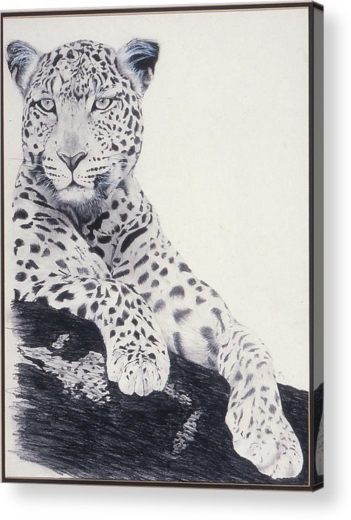 Cat Acrylic Print featuring the drawing White Loepard by Brett Cremeens