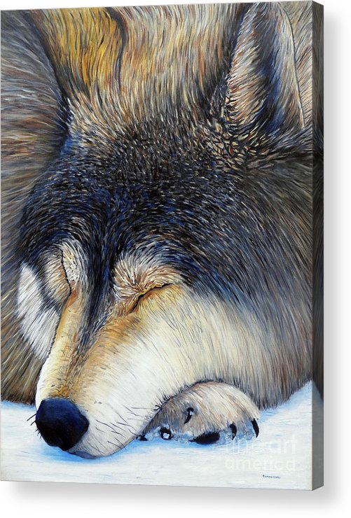 Wolf Acrylic Print featuring the painting Wolf Dreams by Brian Commerford