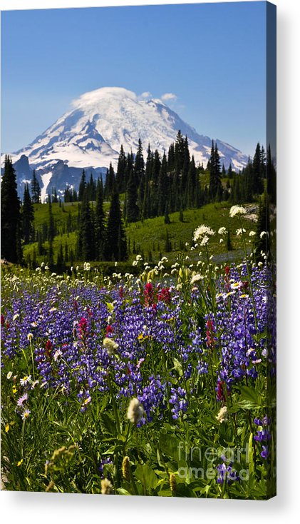 Chinook Pass Acrylic Print featuring the photograph Mt Rainier by Camille Lyver