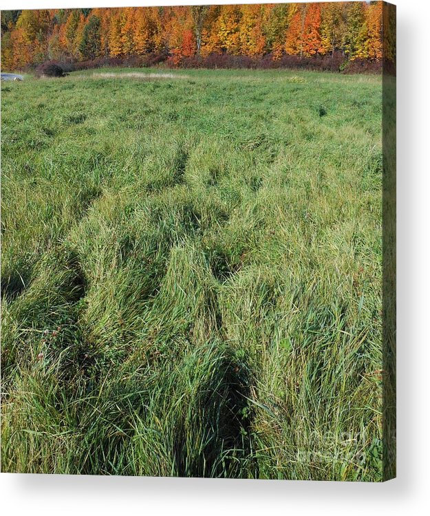 Field Acrylic Print featuring the photograph Autumn Grass by Beebe Barksdale-Bruner