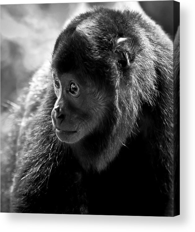 Monkey Acrylic Print featuring the photograph Howler by Scott Elberger