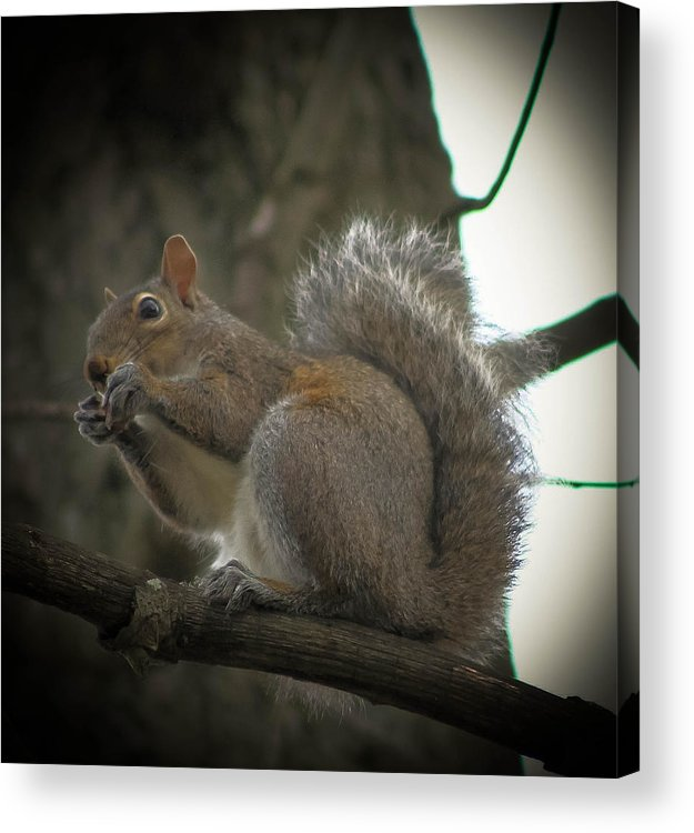Squirrel Acrylic Print featuring the photograph Squirrel by Bobby Martin