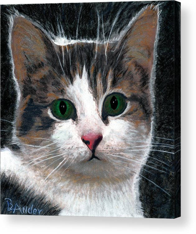 American Shorthair Acrylic Print featuring the drawing Are You Talking To Me by Brent Ander