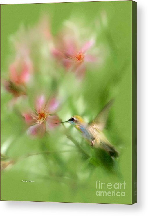 Garden Hummingbird Floral Green Tropical Oleander Acrylic Print featuring the photograph Little Miracles by Carolyn Staut