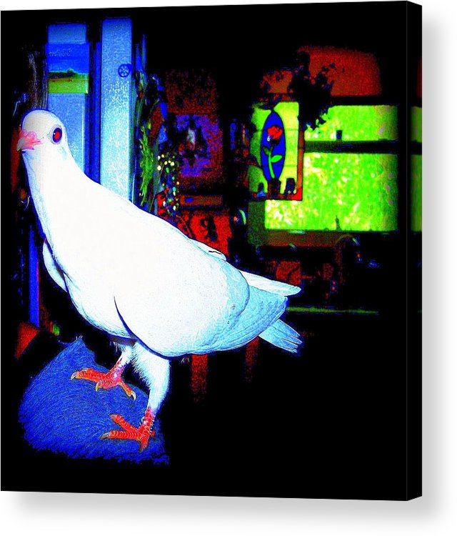 Pigeon Acrylic Print featuring the mixed media Owl Pigeon by YoMamaBird Rhonda