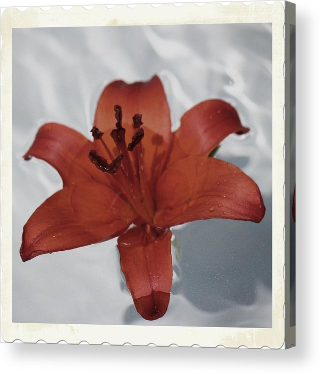 Lily Acrylic Print featuring the photograph Floating Lily by Emma Gossett