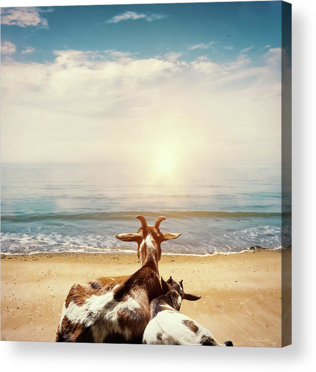 Goats Acrylic Print featuring the photograph Remember This Day by Wim Lanclus