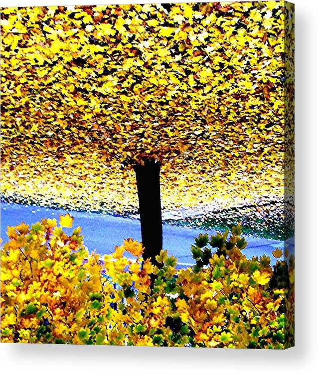 Tree Acrylic Print featuring the photograph The Yellow Ceiling by Richard Hubal