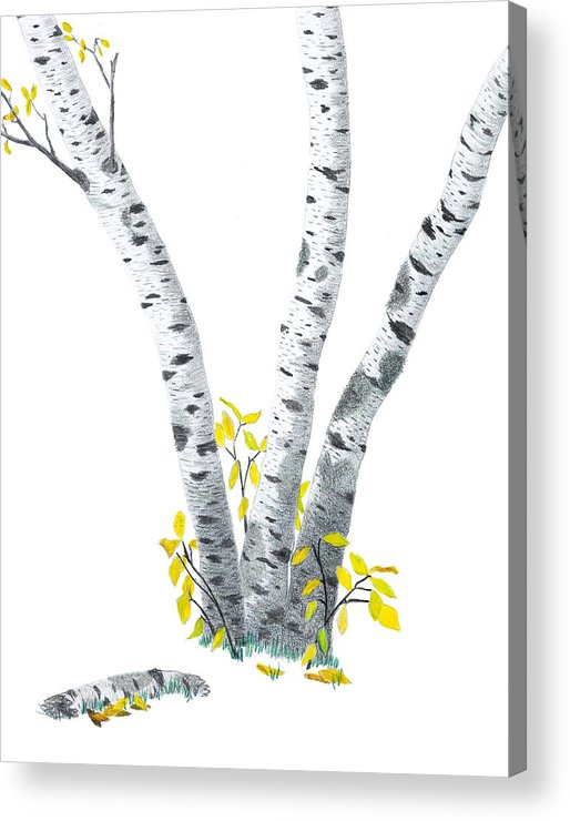 Birches Acrylic Print featuring the drawing Birches by Garry McMichael