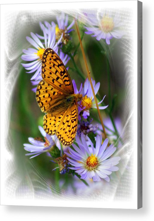 Butterfly Acrylic Print featuring the photograph Butterfly Bliss by Marty Koch