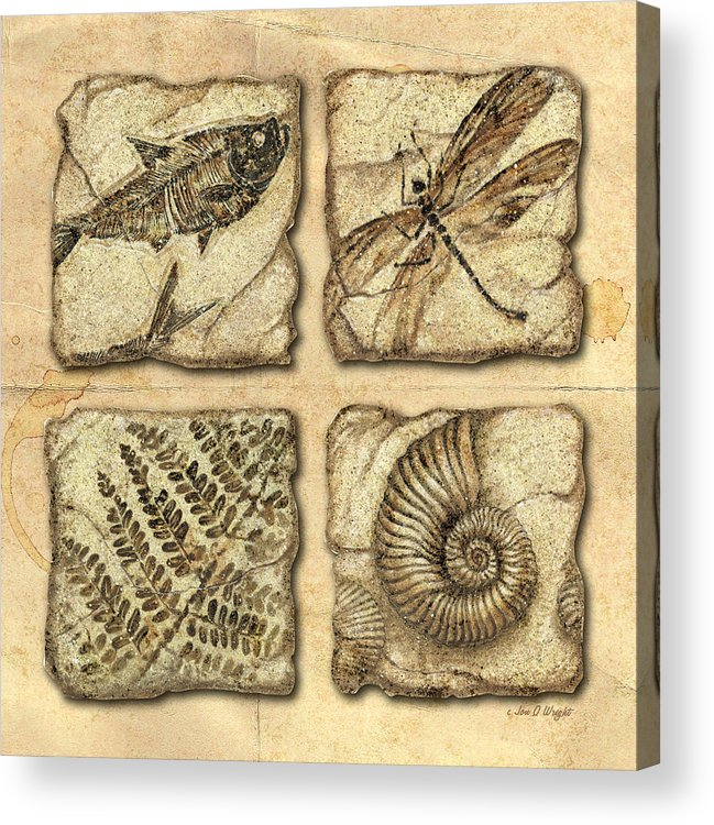Jon Q Wright Acrylic Print featuring the painting Fossils by JQ Licensing
