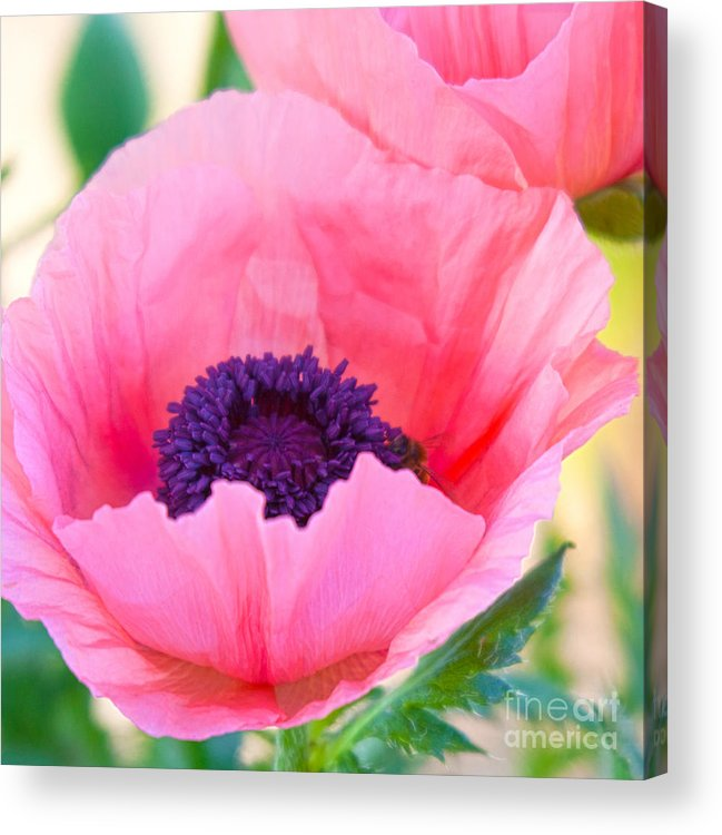 Flowers Acrylic Print featuring the photograph Seductive Poppy by Roselynne Broussard