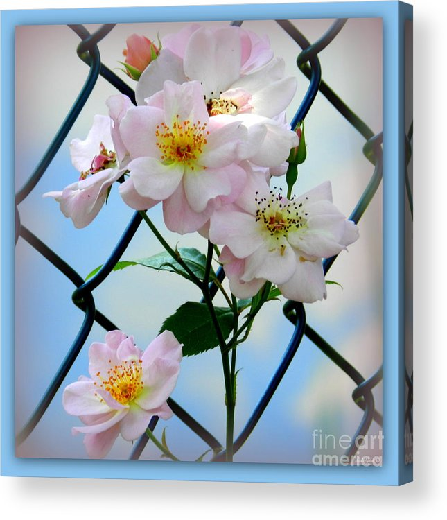 Flower Acrylic Print featuring the photograph Tangled by Linda Galok