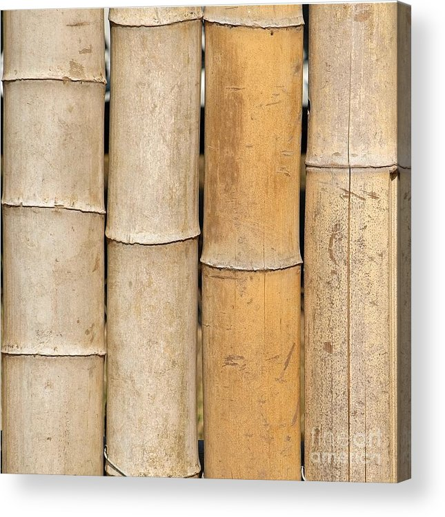 Bamboo Acrylic Print featuring the photograph Straight Bamboo Poles by Yali Shi