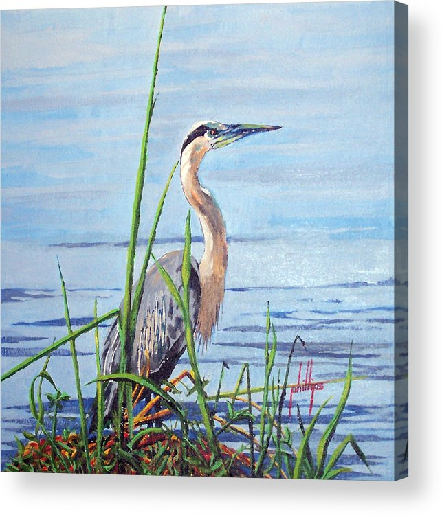 Heron Acrylic Print featuring the painting Blue Heron by Jim Phillips