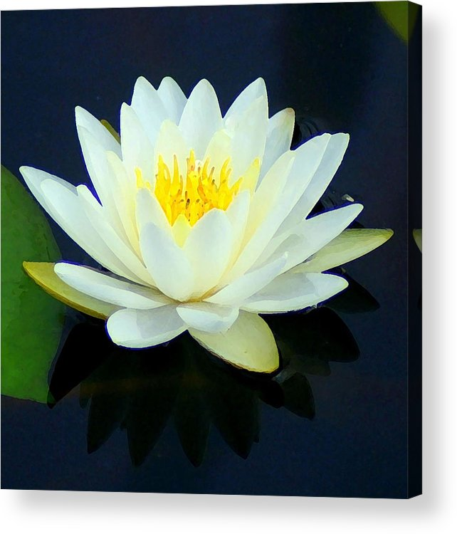 Water Lily Acrylic Print featuring the photograph Water Lily 2 by Lisa Scott