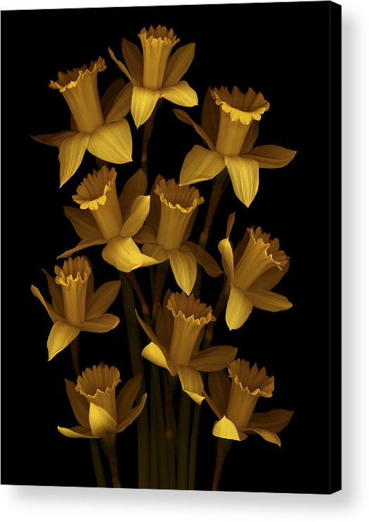 Floral Acrylic Print featuring the photograph Dark Daffodils by Marsha Tudor