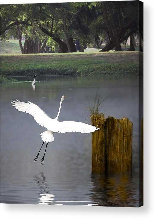 Egret Acrylic Print featuring the photograph Graceful by Cecil Fuselier