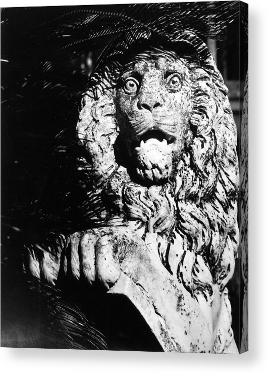 Lion Acrylic Print featuring the photograph King Of The Concrete Jungle by Allan McConnell