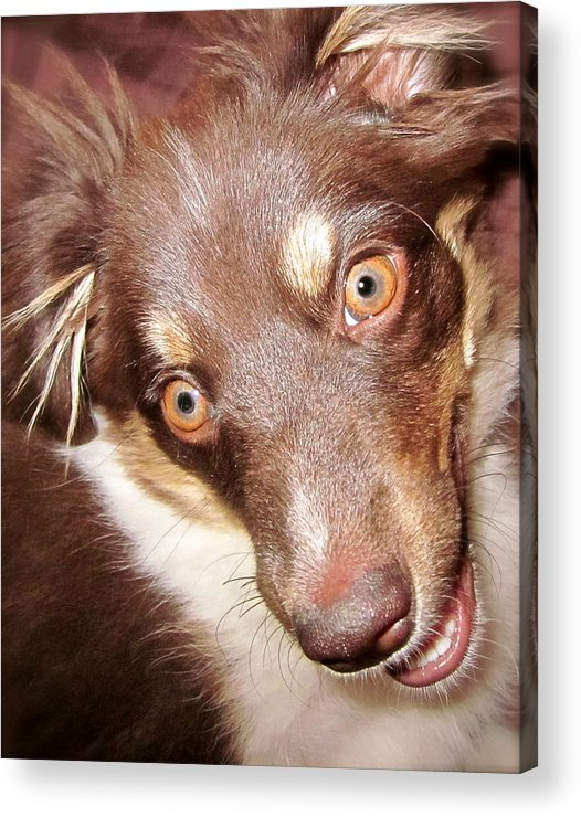 Talking Dog Acrylic Print featuring the photograph Talking Dog by Gwyn Newcombe