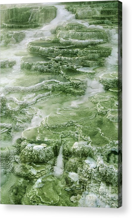 North America Acrylic Print featuring the photograph Limestone Detail Minerva Springs Yellowstone National Park by Dave Welling