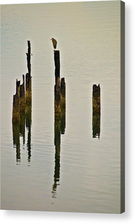 Heron Acrylic Print featuring the photograph Heron On Pilings by Eddie Murdock