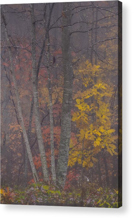 Red Leaves Photographs Acrylic Print featuring the photograph Portrait Of Autumn by Rob Travis