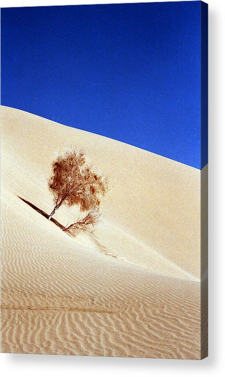 Desert Acrylic Print featuring the photograph Bonded by Robert Shahbazi