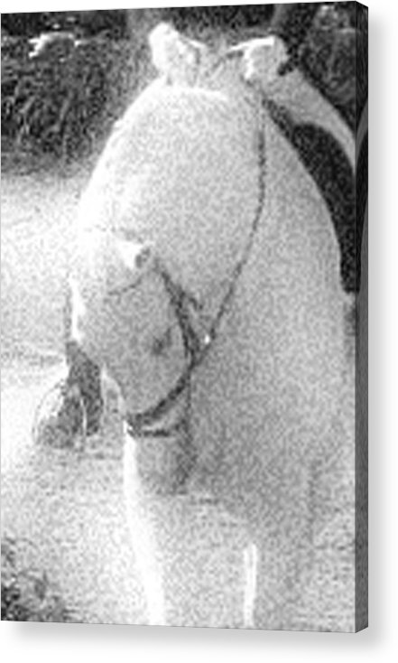 Horse Acrylic Print featuring the photograph Head Tuck by Donna Thomas