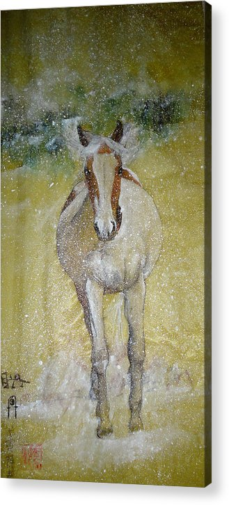 Equine. Winter. Snow. Freedom. Acrylic Print featuring the painting A Picture Of Freedom by Debbi Saccomanno Chan