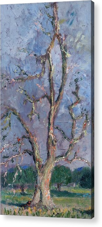Oil Acrylic Print featuring the painting Gnarly Old Tree by Horacio Prada