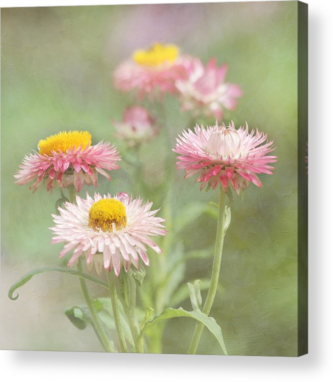 Flower Acrylic Print featuring the photograph Afternoon Delight by Kim Hojnacki