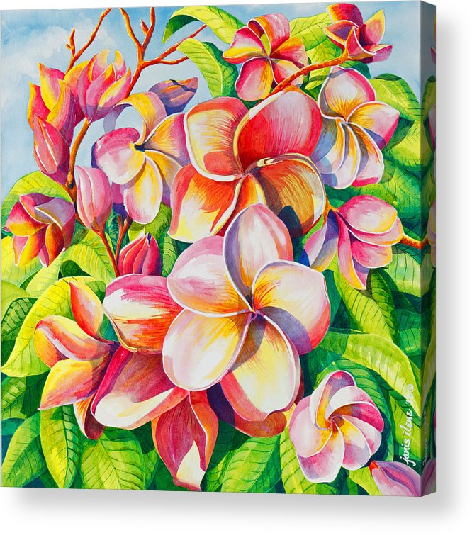Flowers Acrylic Print featuring the painting Sunlit Plumeria by Janis Grau