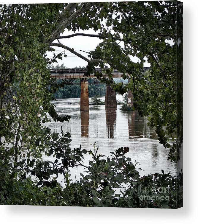 Nature Acrylic Print featuring the photograph Congaree River Glimpse by Skip Willits