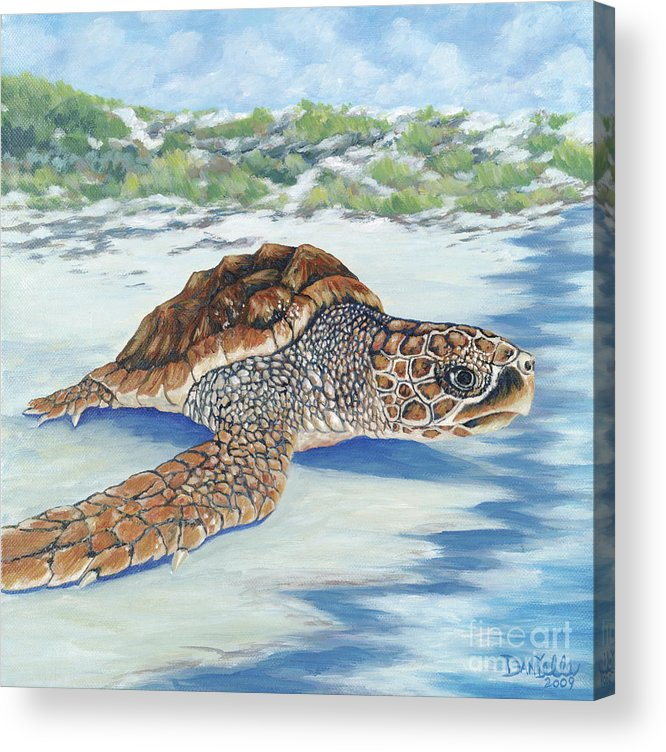Sea Turtle Acrylic Print featuring the painting Dreaming Of Islands by Danielle Perry