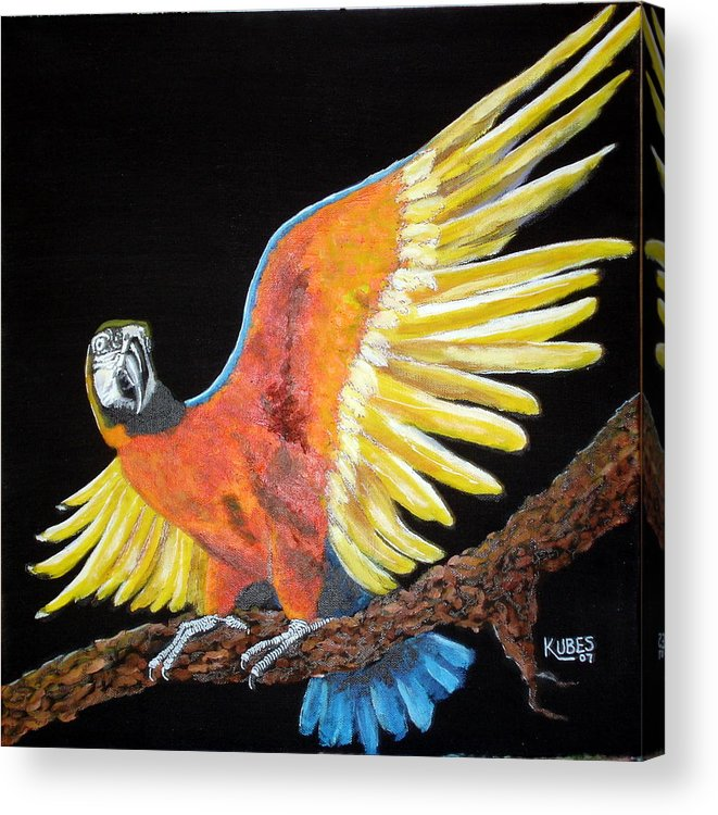 Macaw Acrylic Print featuring the painting Macaw - Wingin' It by Susan Kubes
