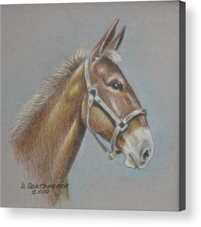 Acrylic Print featuring the painting Mule Head by Dorothy Coatsworth